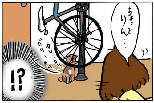 ロードバイクを趣味にした家で猫がいるとこうなる その1