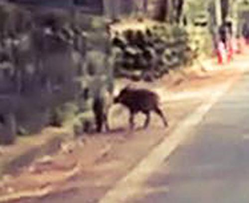 軽井沢でサイクリング!動物に注意!!!