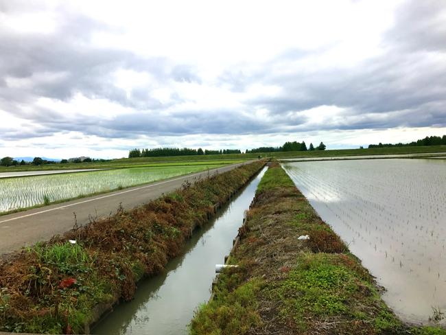 荒川〜入間川〜カフェキキまでの180kmロングライド!田んぼの真ん中にある自転車道