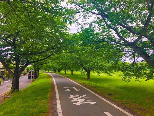 荒川〜入間川〜カフェキキまでの180kmロングライド!入間川CR出口は桜並木でした♪