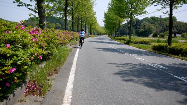 木更津から養老渓谷までサイクリング!ロードバイクで60〜70kmのちょうど良い標高でした♪途中つつじが♪