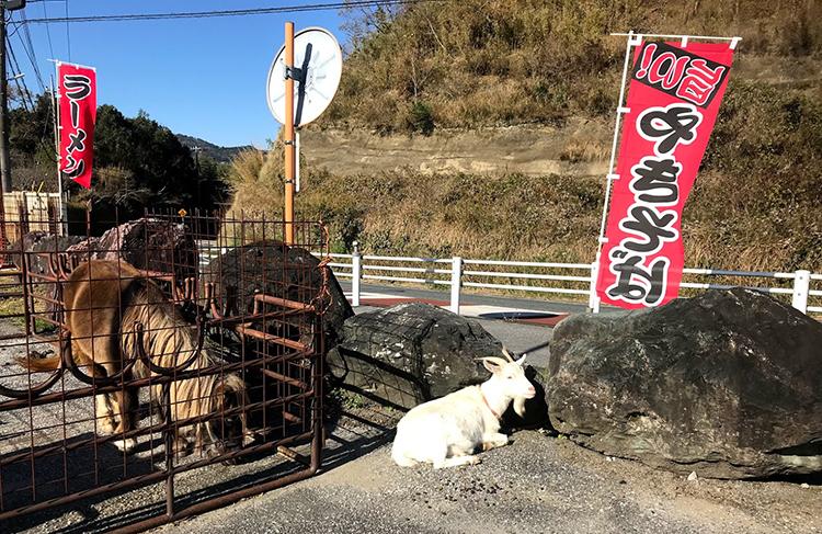 豪華メンバーで鹿野山〜千葉房総ライドしてきました☆ランチはここ!清和ゆめの丘牧場。ヤギやイノシシやうさぎなど動物がいっぱい!