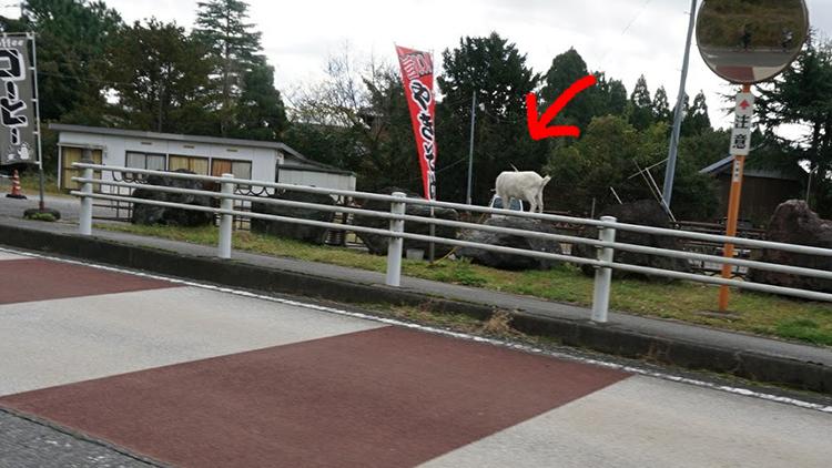 豪華メンバーで鹿野山〜千葉房総ライドしてきました☆ランチはここ!清和ゆめの丘牧場。