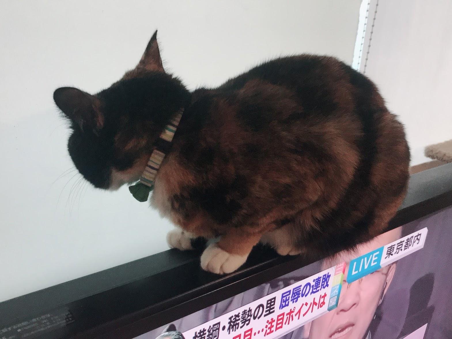 【りんこ編】Twitterに投稿しているPちゃんの日常4コマ漫画まとめ 猫が粗相をした時